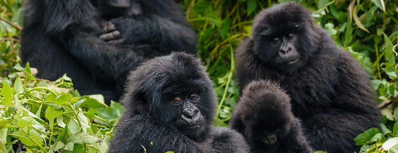 3 Days Mgahinga Gorilla Tour