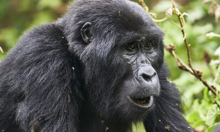 5 Days Uganda Gorillas & Wildlife Safari